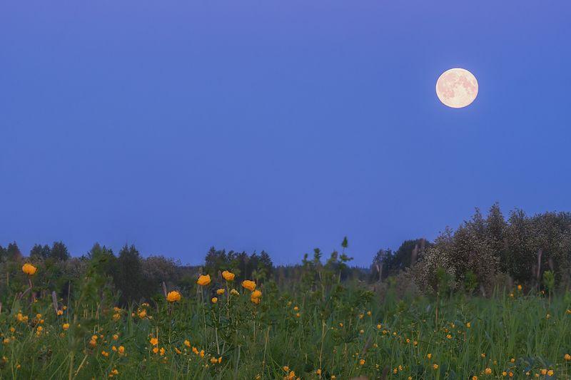 Белые ночи севераphoto preview