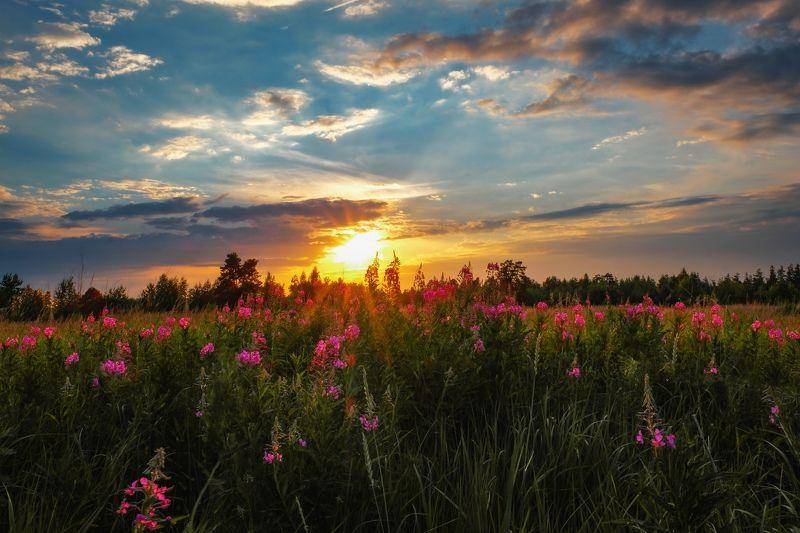 закат, лето, пейзаж, поле, фото Сказка летнего закатаphoto preview