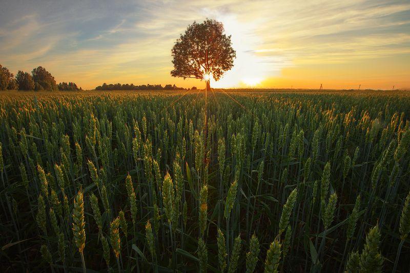 золотое сечение, пейзаж, закат Золотое сечениеphoto preview