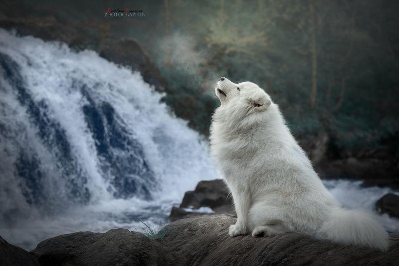 У водопадаphoto preview
