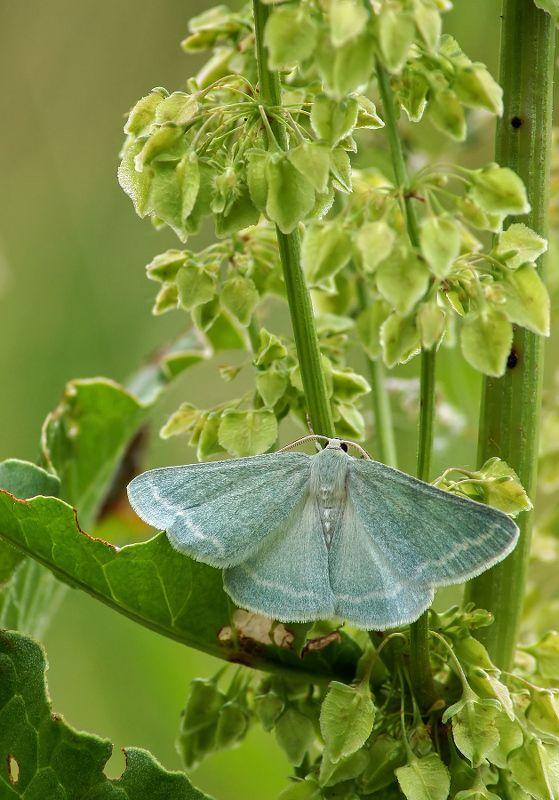 Бабочка Бабочкаphoto preview