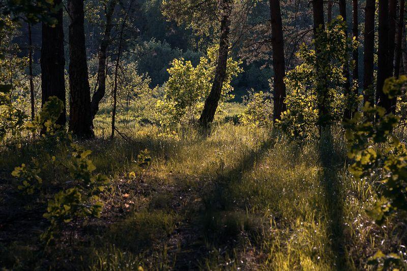 контровый свет, опушка, река, лес, вечер, берёзы, молодая листва, мещёра, рязанская область Этюды в контровом светеphoto preview