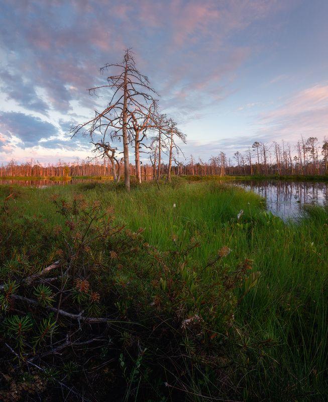 пейзаж закат болото латвия рига Закат на болотеphoto preview