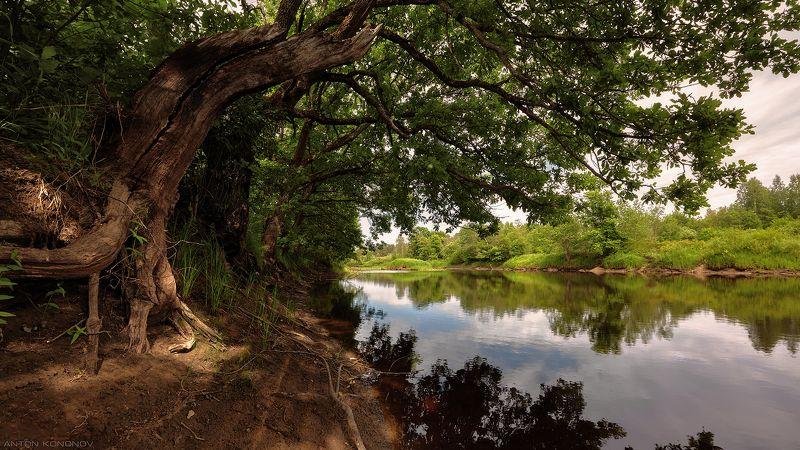 Дубы над рекой...photo preview