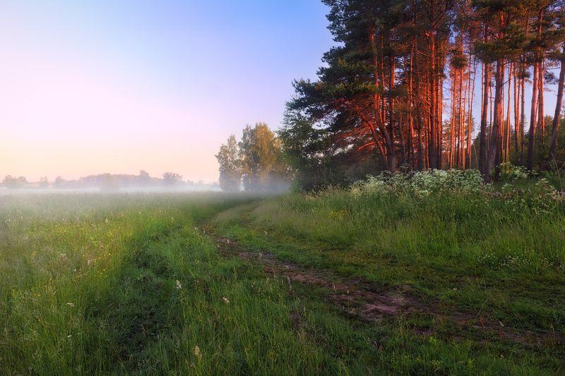 рассвет, поле, лес, дымка, Рассветнаяphoto preview