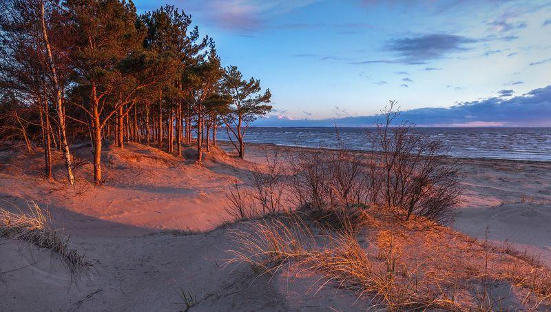 ленинградская область, ленобласть, сосновый бор, пляж, закат \