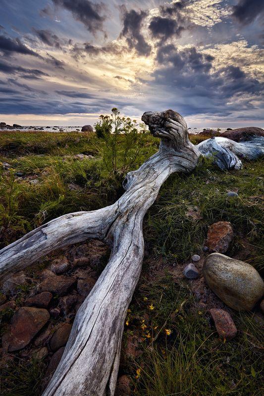 финский залив, пейзаж, небо Вечер на заливеphoto preview