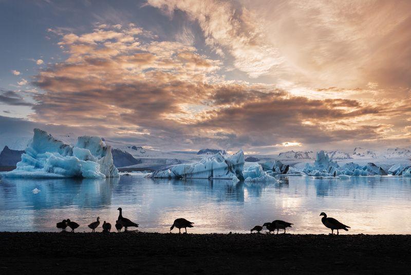 Лед, пламя и утки.photo preview