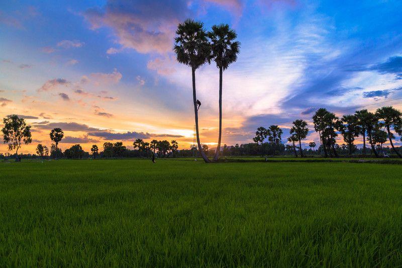 Hoang Hon, Tinh Bien Bien, An Giang, Vietnamphoto preview