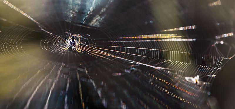 природа, макро, насекомое, паук, паутина Сетка вещанияphoto preview