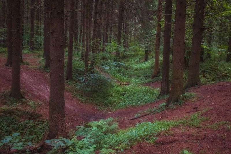 Таинственный лес в июлеphoto preview