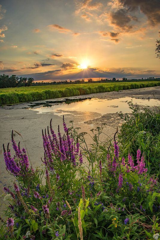 sunset national unteres odertal mirror lake river water sun sunlight flowers Sunset on the Odra riverphoto preview