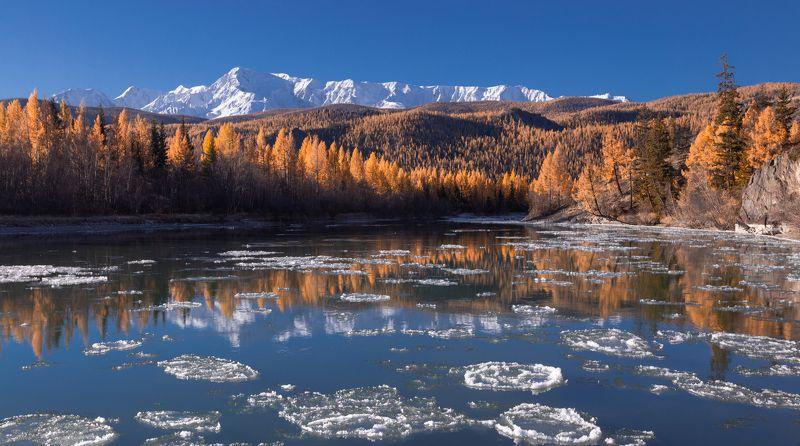 горный алтай, чуя, октябрь, осень, шуга, лиственницы, горы Чуя в золотомphoto preview