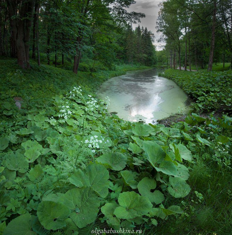 парк, лето, пруд, Павловск, Санкт-Петербург Где-то в Павловском паркеphoto preview