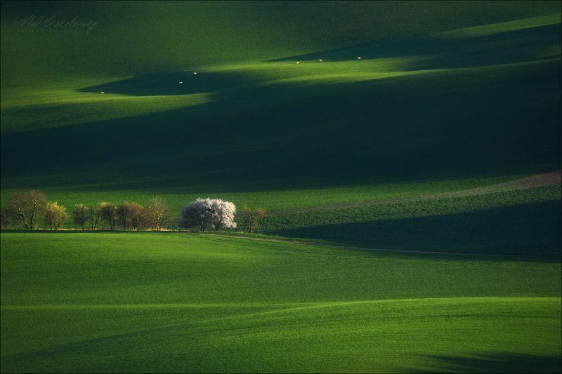 Чехия, Южная Моравия, весна, South Moravian, Czech,  Моравская весна ..photo preview