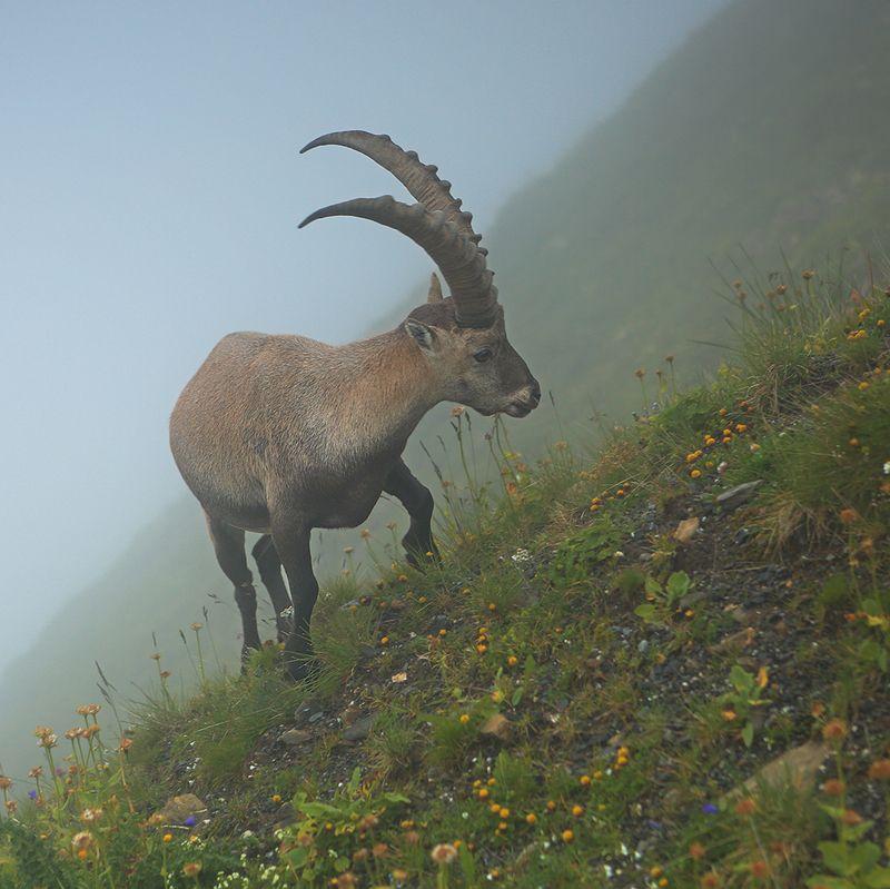 swiss По нехоженым тропам в туманеphoto preview