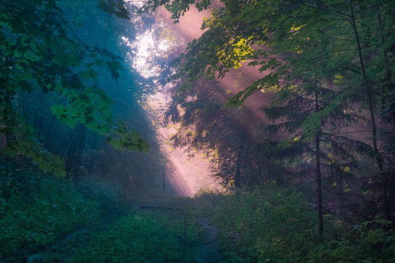 Раннее утро в лесуphoto preview