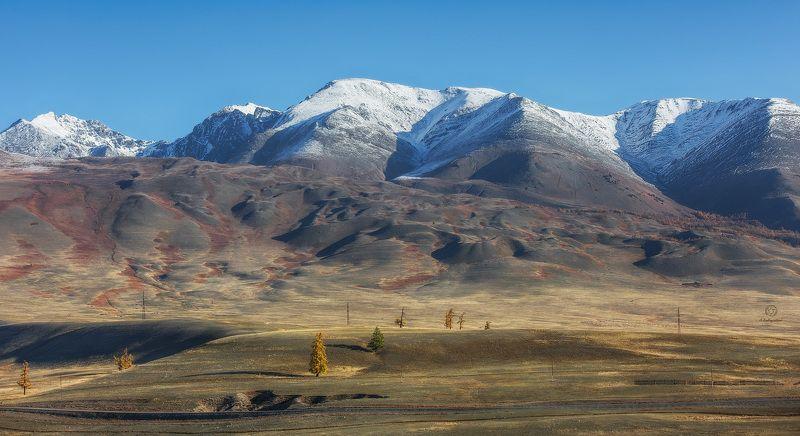 рельеф, горы, деревья Рельефные горные вершины / Altaiphoto preview