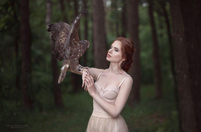 hawk, forest, beauty, bird, flight, ястреб. полет girl with a hawkphoto preview