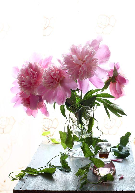 натюрморт, цветы, пионы Пиончикиphoto preview