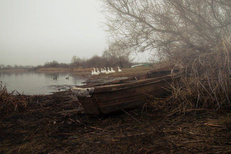 гуси осень лодка туман дождь природа пейзаж autumn boat rain nature landscape Гуси гуси гагага!photo preview