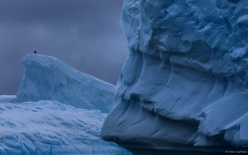 antarctic, penguin, ice, iceberg, gentoo Мечтателиphoto preview