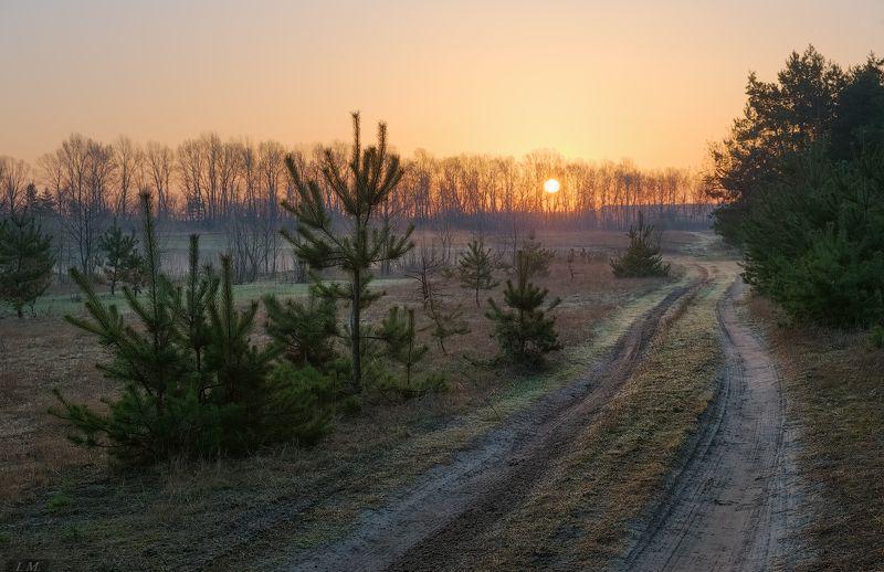 апрель, весна, дорога, дымка, лес, луг, пар, рассвет, солнце, сосны, утро, trees, april, mist, pine, meadow, countryroad, fog, forest, morning, road, spring, sun, sunrise ***photo preview
