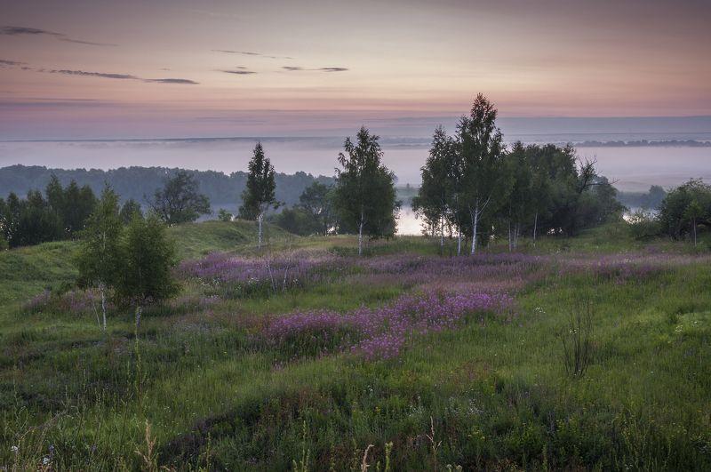 лето,природа,пейзаж,утро,восход,река,туман В тумане спрятались березкиphoto preview