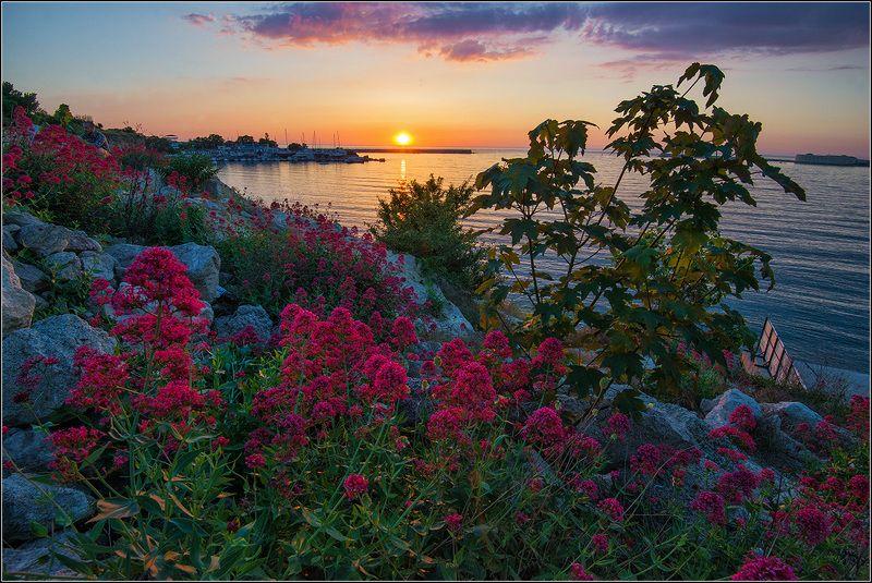 крым, море, солнце, цветы Крымские вечераphoto preview