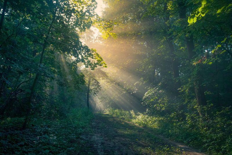 Утро в лесуphoto preview