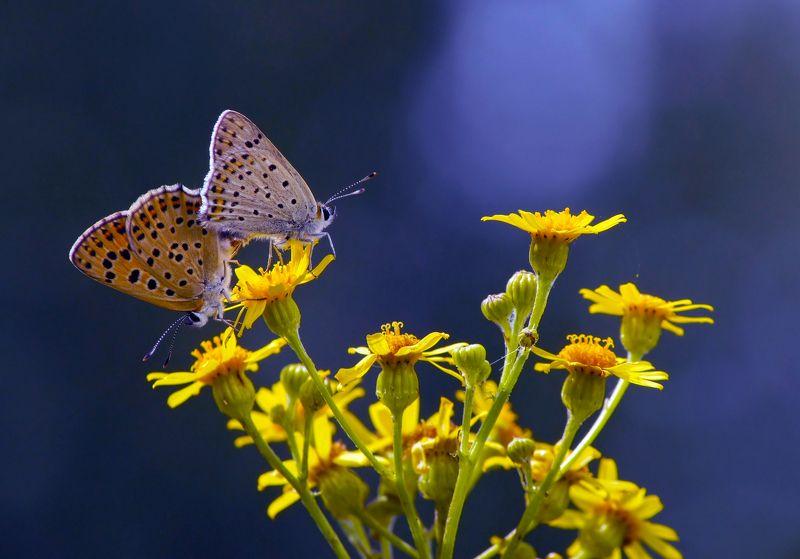 бабочки Пестики тычинки, или говорят, что света белого не видят...photo preview