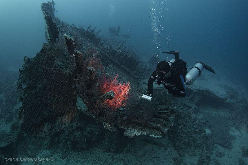Emperor Fraser wreck corals Emperor 3.0.photo preview