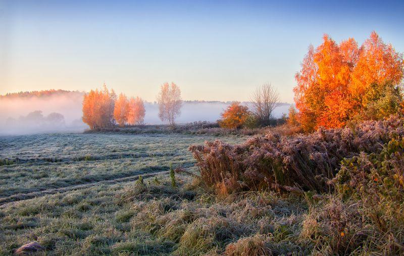 утро, осень,туман, иней, Осенние туманыphoto preview