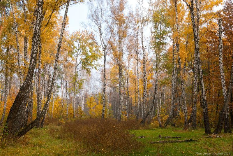 пейзаж, природа, лес, октябрь осень, туман, утро, украина Осеннее настроениеphoto preview