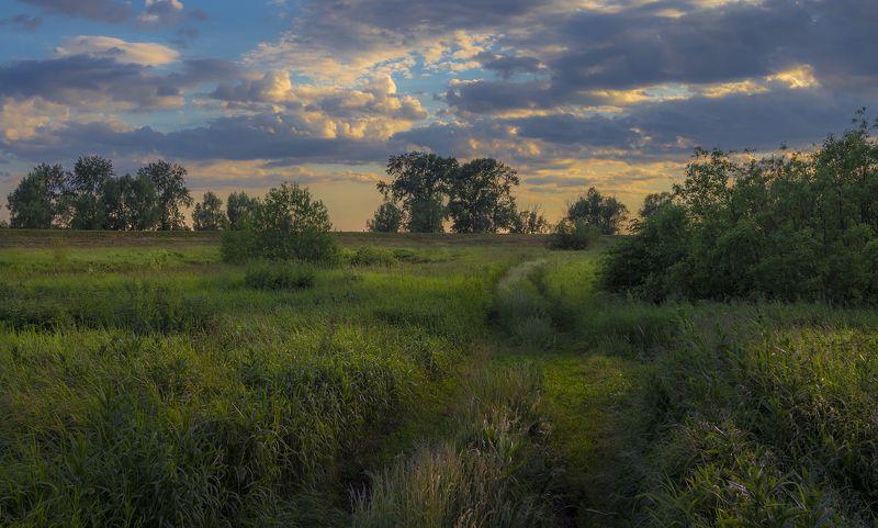 пейзаж,лето,вечер Летоphoto preview