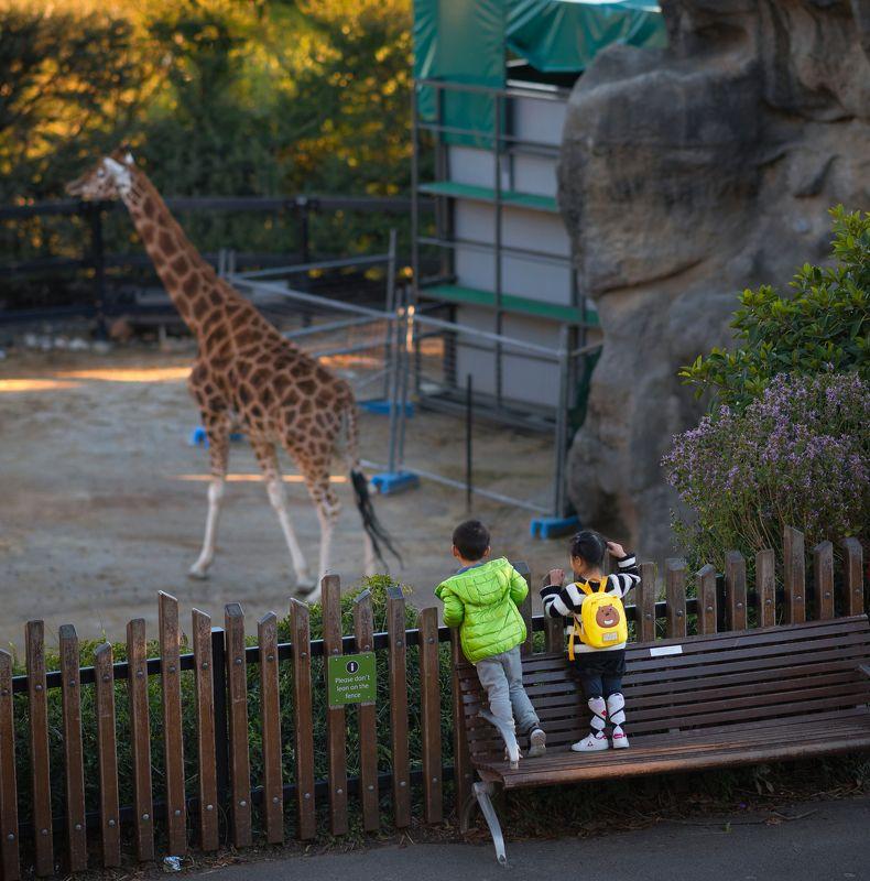 Mr giraffephoto preview