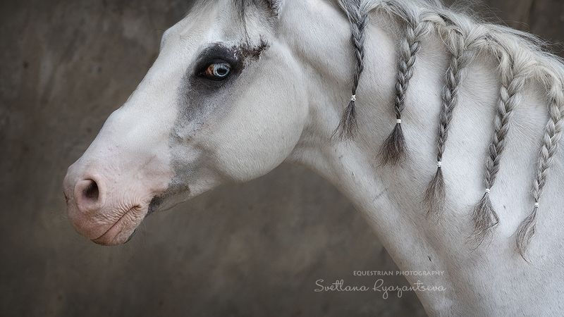 horse, лошадь, лошади, portrait Зефирphoto preview