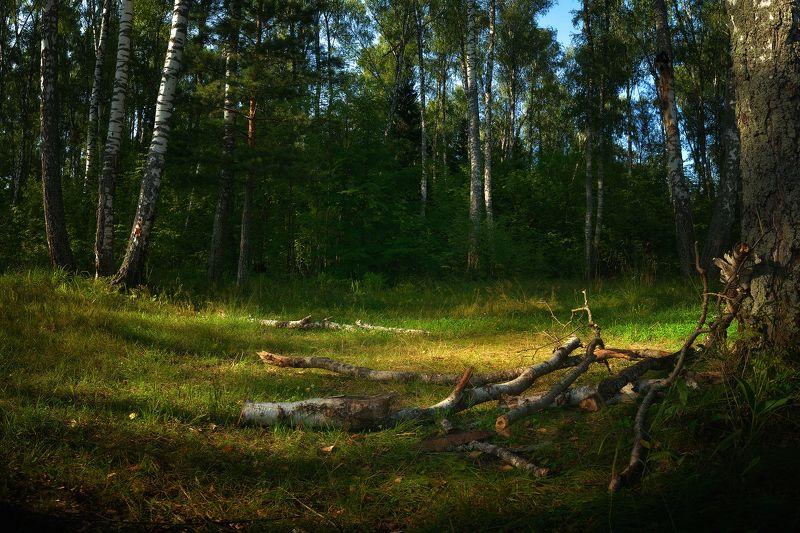 лес, природа, пейзаж, подмосковье Летние мгновенияphoto preview