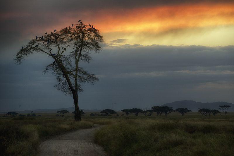Африканские мотивыphoto preview