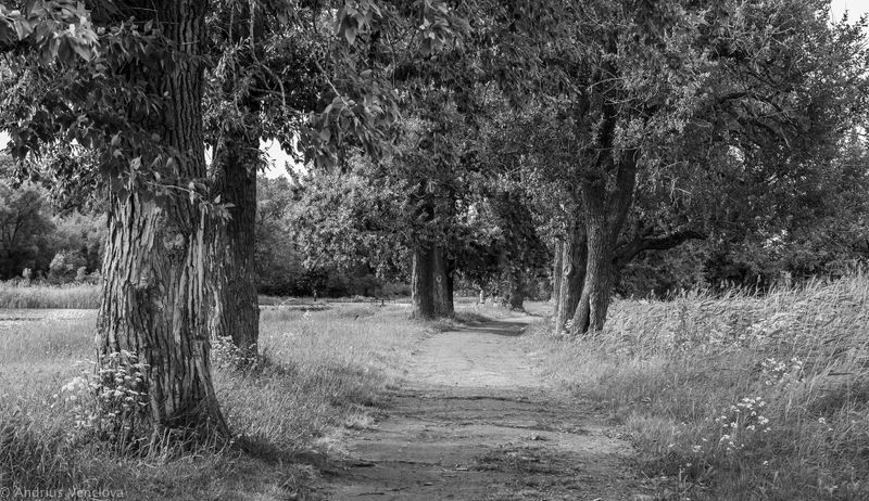 Old pathphoto preview