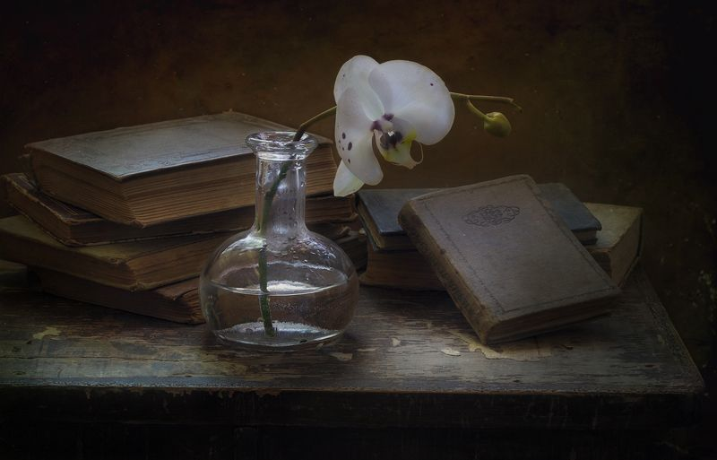 натюрморт Орхидеяphoto preview