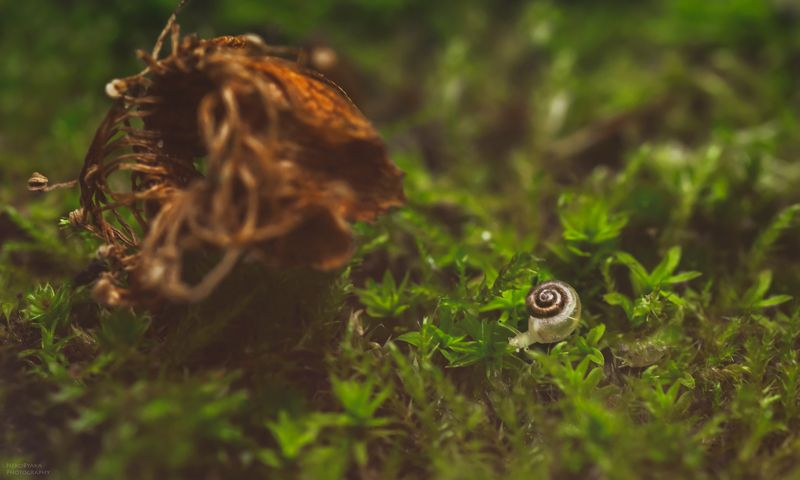 макро, природа, растения, мох, улитка, macro, nature, plants, moss, snail, крошечная кроха )photo preview