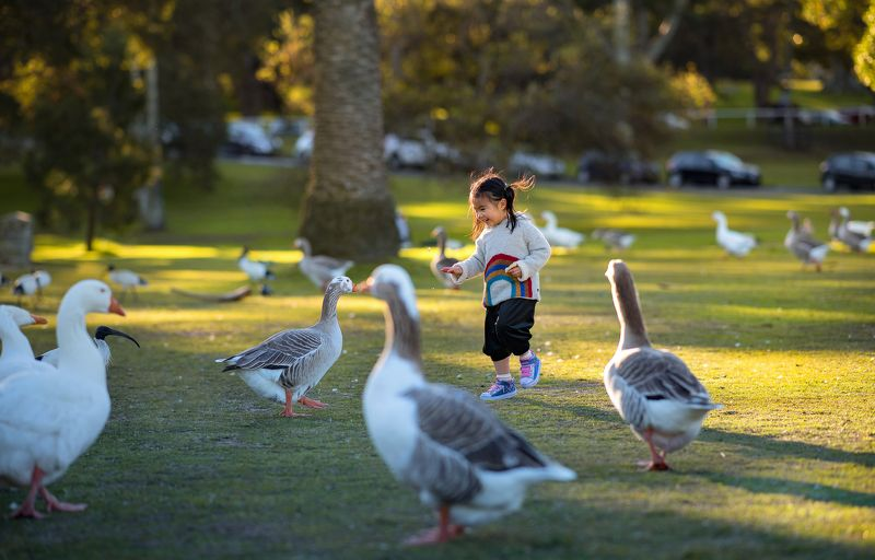 goose...photo preview