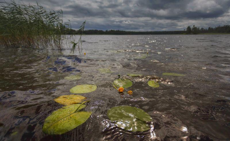 питер, приозерск, лето, пейзаж, вуокса Погода меняется . . .photo preview