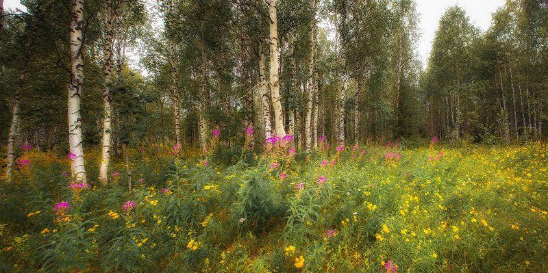 природа,коми,август,север,лес Вот и августphoto preview