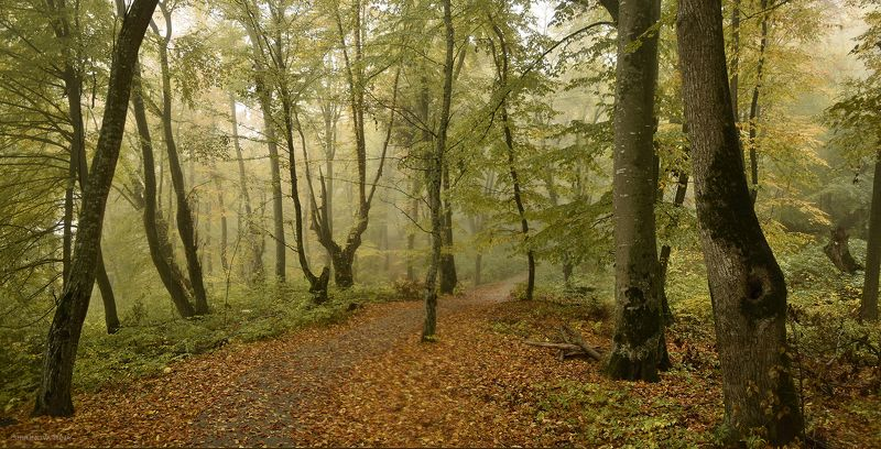 Осенняя тропаphoto preview