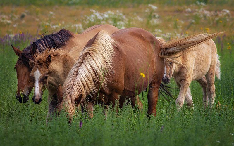 лошади,природа,село,печора,коми,север Сельская жизньphoto preview