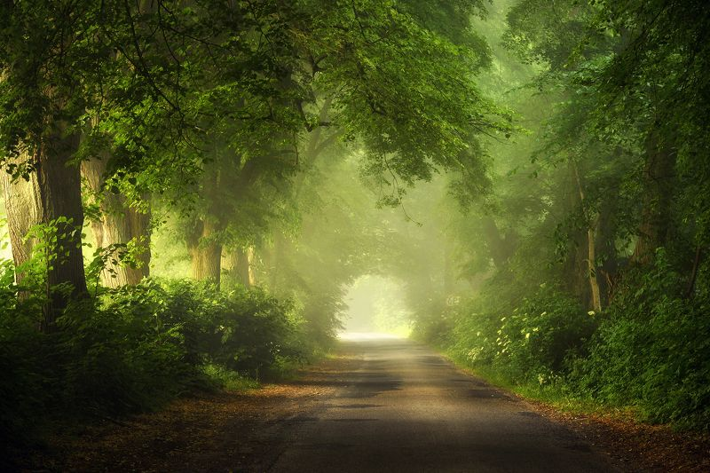 towards light tunnel road magic mist foggy path green trees dranikowski poland Towards the lightphoto preview