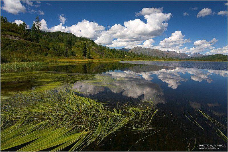 природа, казахстан, алтай, altay, kazakhstan, safari, photo Алтайское фотосафари (I)photo preview