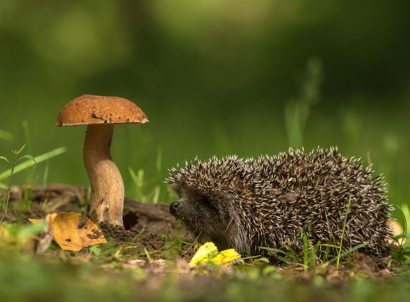 птицы,лето,лес,ёж,грибы Картинка из лесаphoto preview